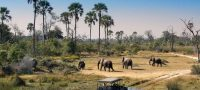 Botswana 4x4 self drive safari